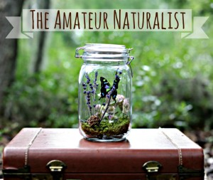 The Amateur Naturalist Etsy Shop DIY Terrarium Kits Nature Gifts for Kids